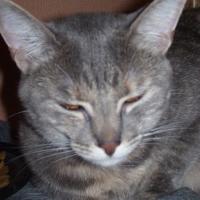 Photo de profil de Duchesse