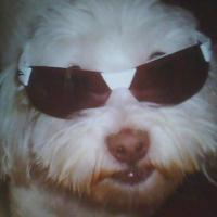 Photo de profil de Vanille
