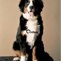 Photo de profil de Orton
