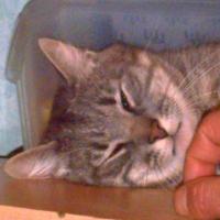 Photo de profil de Misty