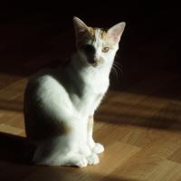 Photo de profil de Lina