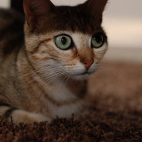 Photo de profil de Abysse