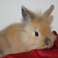 Photo de profil de Lapinoue 1