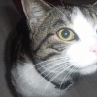 Photo de profil de Pimous