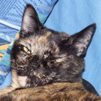 Photo de profil de Sarabi