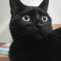 Photo de profil de Chica