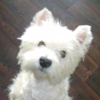 Photo de profil de Guiness