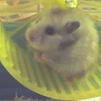 Photo de profil de Dina