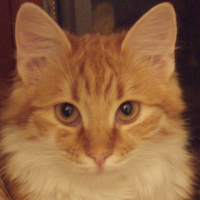 Photo de profil de Masia