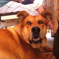 Photo de profil de Tichio