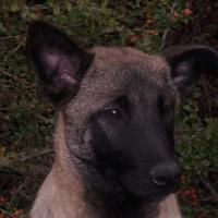 Photo de profil de Edgie de l'esprit canin