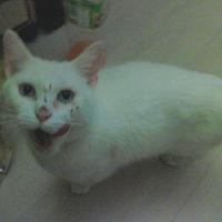 Photo de profil de Moli