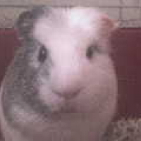 Photo de profil de Yoshi
