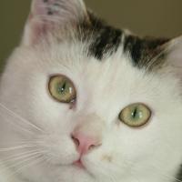 Photo de profil de Moustik