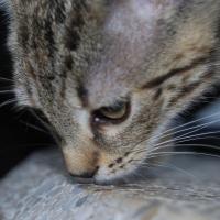 Photo de profil de Nala