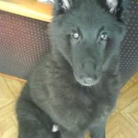 Photo de profil de Ikkyo