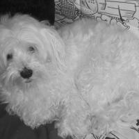 Photo de profil de Chipie