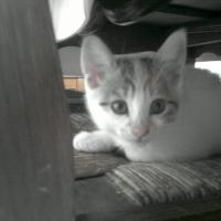 Photo de profil de Extasy