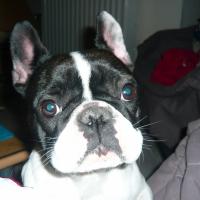 Photo de profil de Lana
