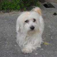 Photo de profil de Boby