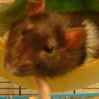 Photo de profil de Cooky