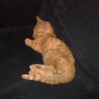 Photo de profil de Caramel