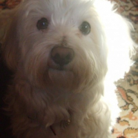 Photo de profil de Sam