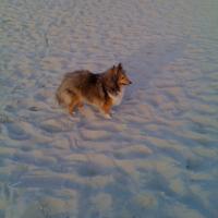 Photo de profil de Cranberries des marais audomarois