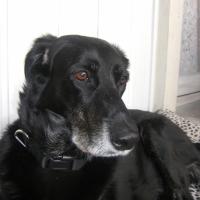 Photo de profil de Pepsy