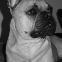 Photo de profil de Diesel