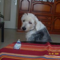 Photo de profil de Oupsy