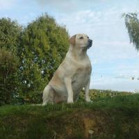 Photo de profil de Ulla