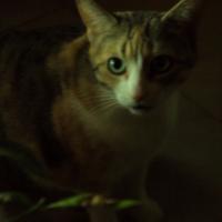 Photo de profil de Vénus