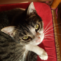 Photo de profil de Chance