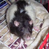 Photo de profil de Stuart