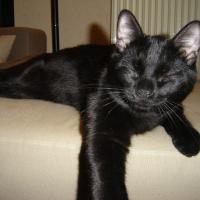 Photo de profil de Blaky