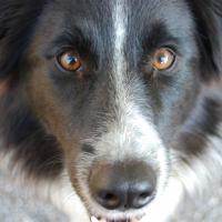 Photo de profil de Bootsie