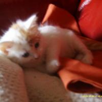 Photo de profil de Micky