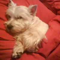 Photo de profil de Rosie du domaine de grandselve