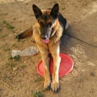 Photo de profil de Balou