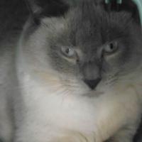 Photo de profil de Athos