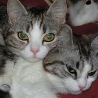 Photo de profil de Hadesse & sanka