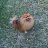 Photo de profil de Tayson