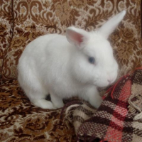 Photo de profil de Ange