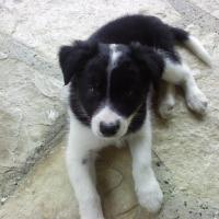 Photo de profil de Tess