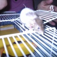 Photo de profil de Ratatouille