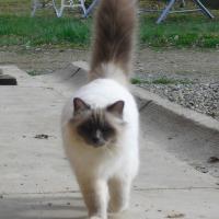 Photo de profil de Cornelius des bleus du lude