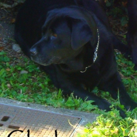 Photo de profil de Clochette