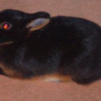 Photo de profil de Inaya