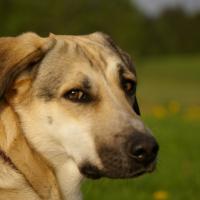 Photo de profil de Laika